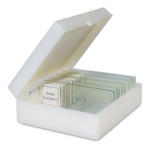 Microscope slides with specimens for kids