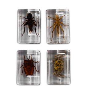 Bug specimen set